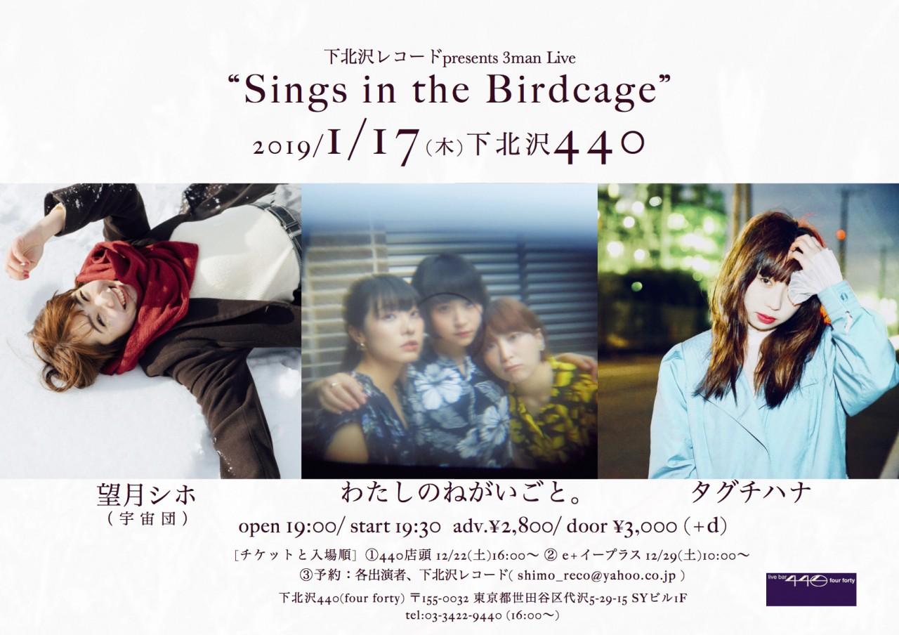 """下北沢レコードpresents 3man Live """"Sings in the Birdcage"""""""